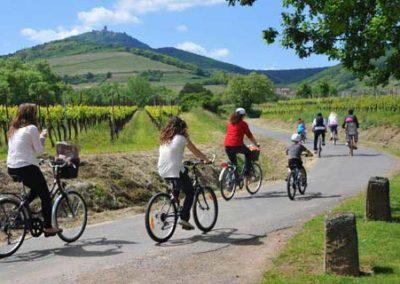 Visite vélo dans la campagne Alsacienne