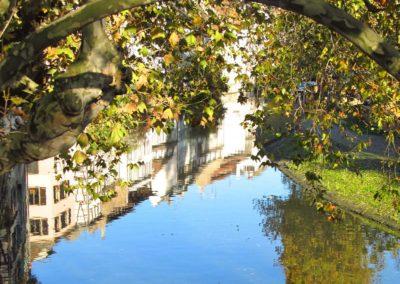 Vue sur l'Ill à la Petite France sous les branches de l'arbre magique
