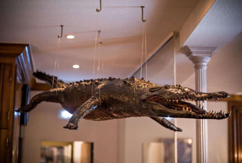 Uncommon signs – the Crocodile